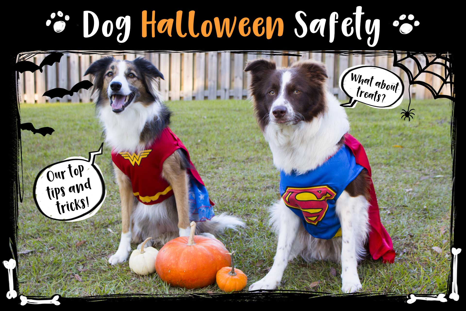 Dog Halloween Safety